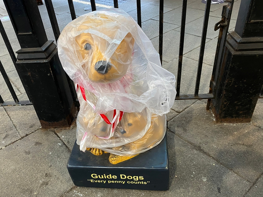 guide dogs for the blind collection box wrapped in plastic