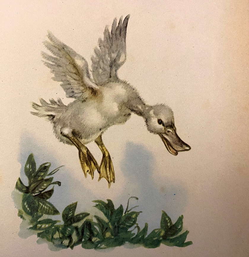 Ugly Duckling book illustration baby swan