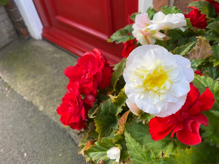 Red and white begonias and red front door