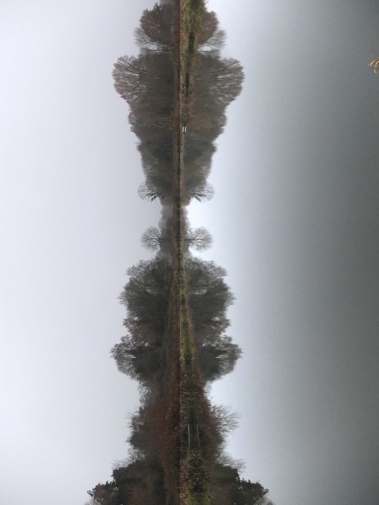 trees reflected in pond. Image turned vertical