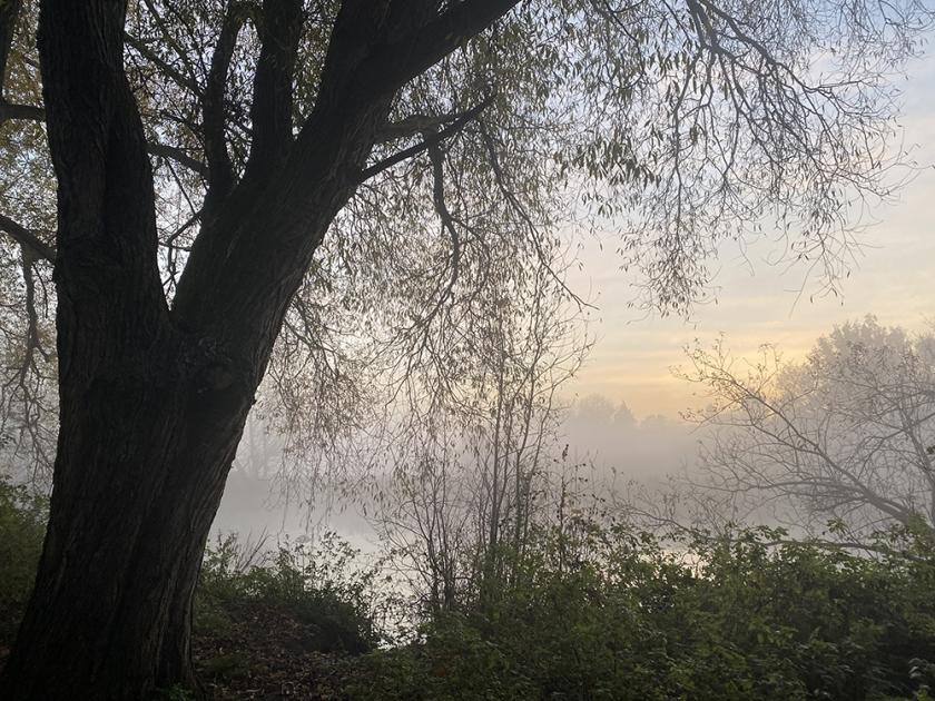 Tree overlooking river. Misty autumn sunrise