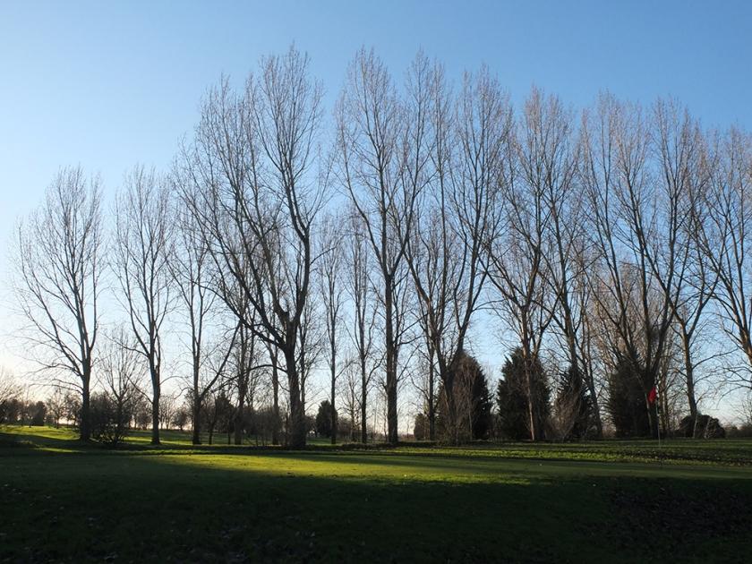 Winter trees on skyline