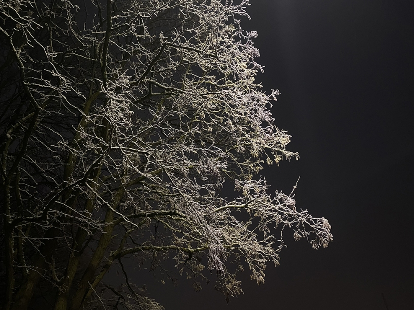 snowy tree against dark sky