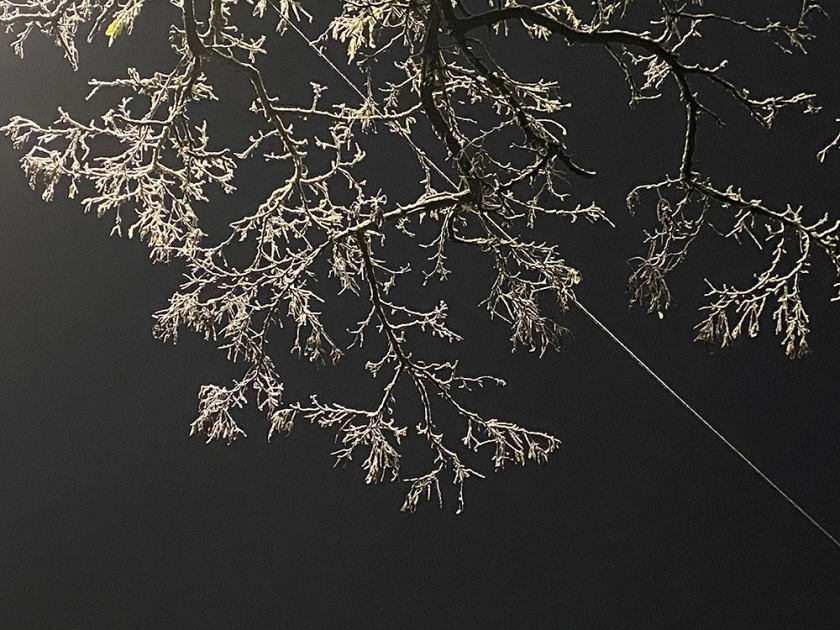 snowy branch and cable against night sky