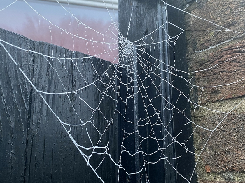 hoar frost on spider's web