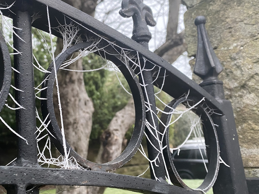 hoar frost on spiders' webs on wrought iron gate