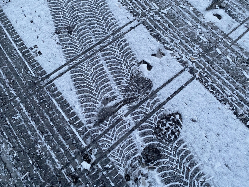 mixed tracks in light snow